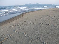 2007.5 延岡の海 029.jpg